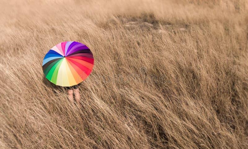 Kleurrijke paraplu in de droge weide stock afbeelding