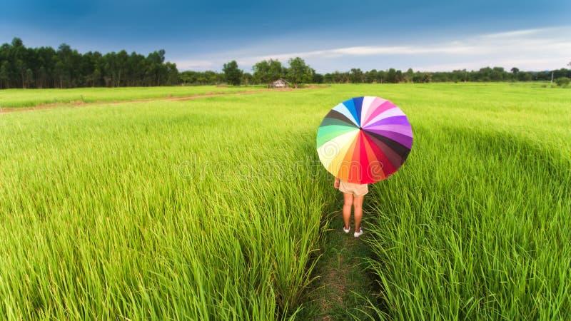 Kleurrijke paraplu in het groene padieveld royalty-vrije stock foto's