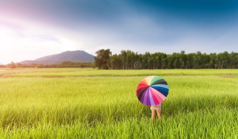 Kleurrijke paraplu in het groene padieveld stock foto's