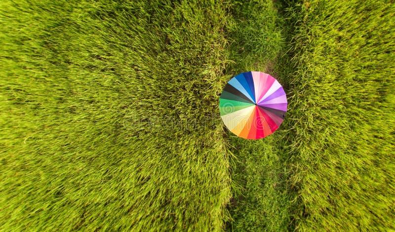 Kleurrijke paraplu in het groene padieveld stock afbeelding