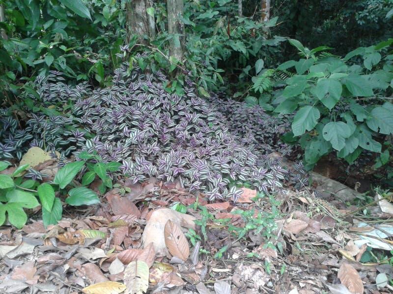 Kleurrijke purpere bladeren in het bos royalty-vrije stock afbeelding