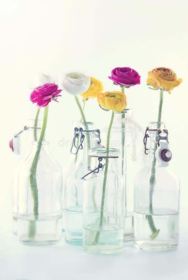 Kleurrijke ranunculus bloemen royalty-vrije stock fotografie