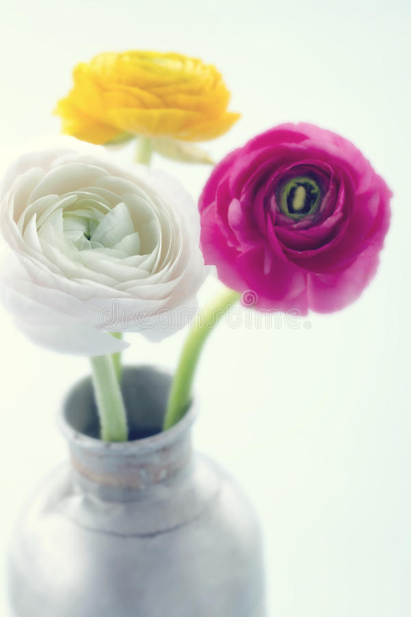 Kleurrijke ranunculus flowers2 royalty-vrije stock afbeeldingen