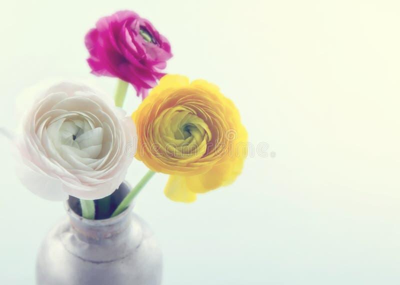 Kleurrijke ranunculus flowers4 stock foto