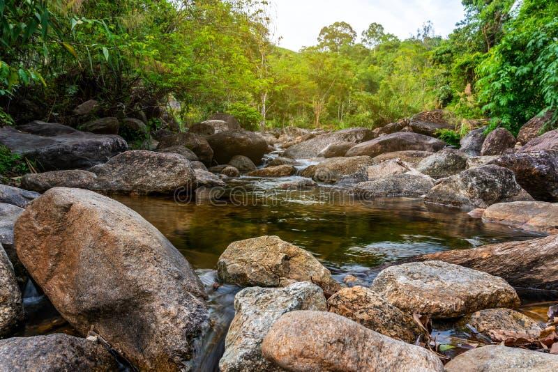 Kleurrijke riviersteen en boom, de rivierboom van het Weergevenwater in bos stock foto
