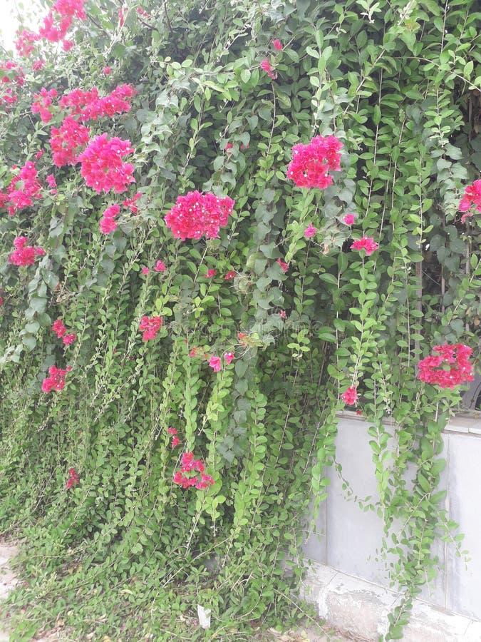 Kleurrijke roze bloem en royalty-vrije stock afbeelding
