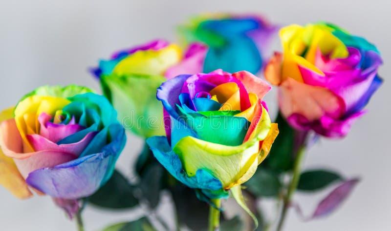 Kleurrijke Rozen royalty-vrije stock afbeeldingen