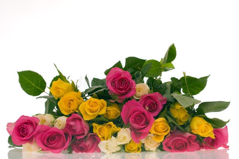 Kleurrijke rozen stock fotografie