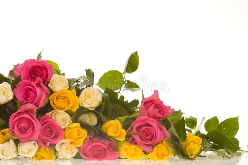 Kleurrijke rozen royalty-vrije stock foto