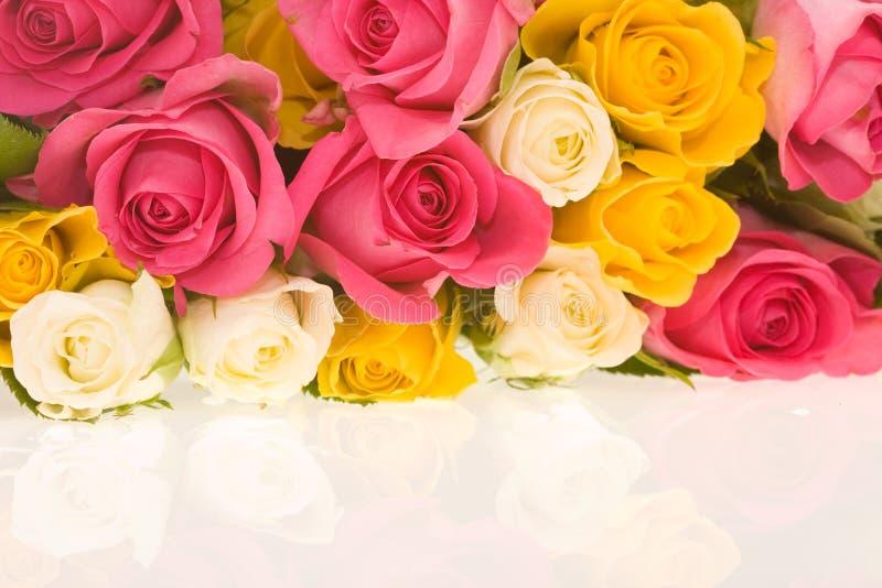 Kleurrijke rozen royalty-vrije stock fotografie