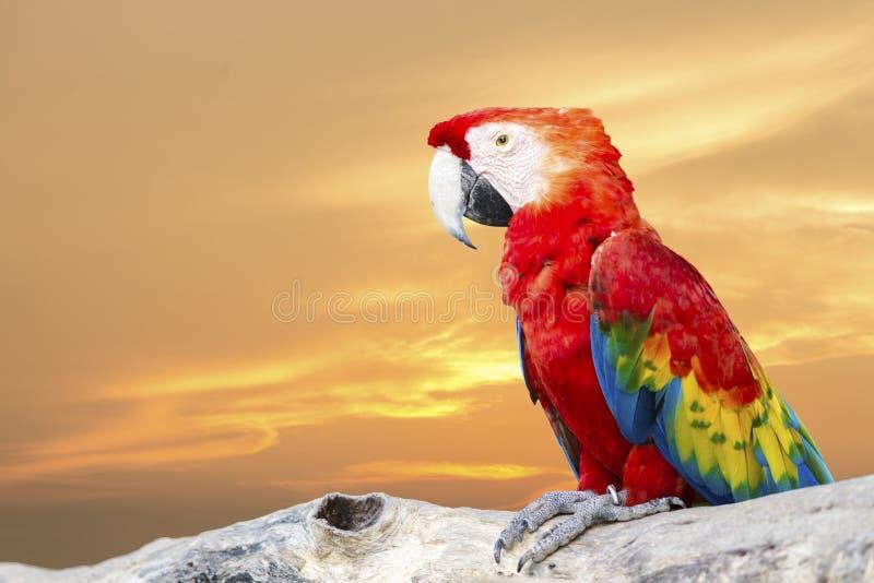 Kleurrijke Scharlaken Ara stock afbeeldingen