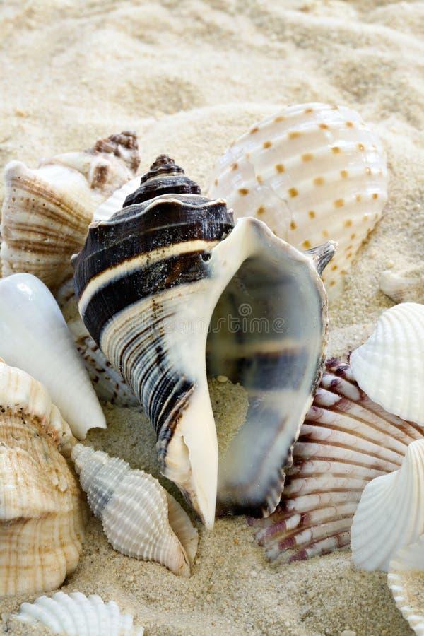 Kleurrijke Shells op strand stock fotografie