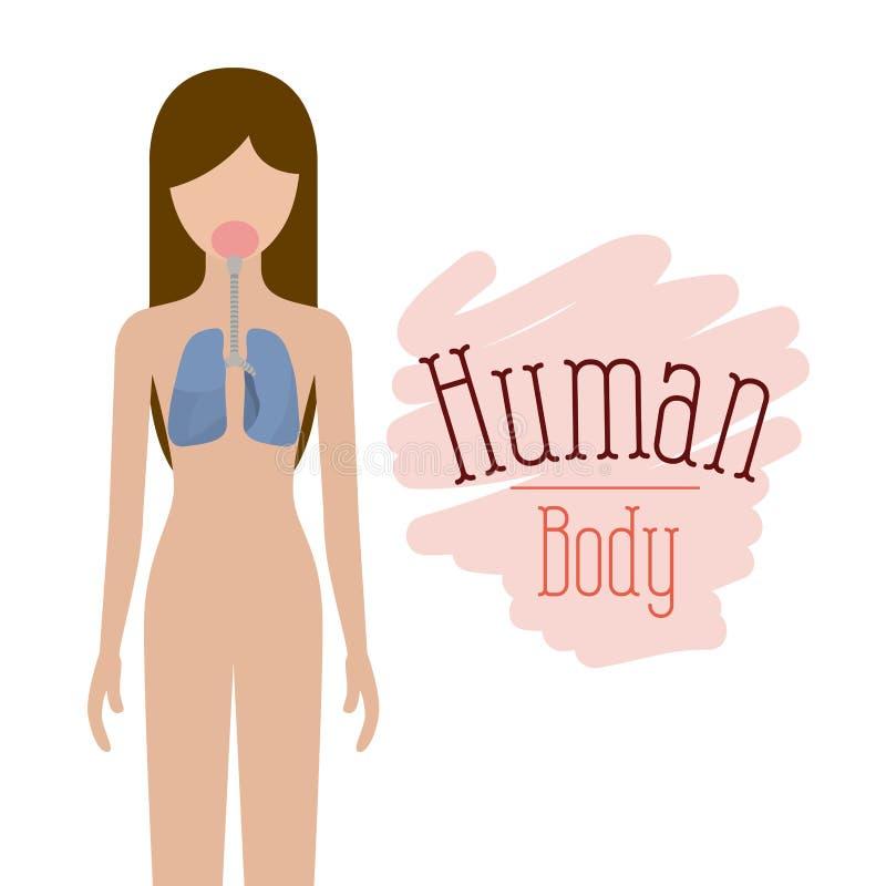 Kleurrijke silhouet vrouwelijke persoon met ademhalingssysteem menselijk lichaam stock illustratie