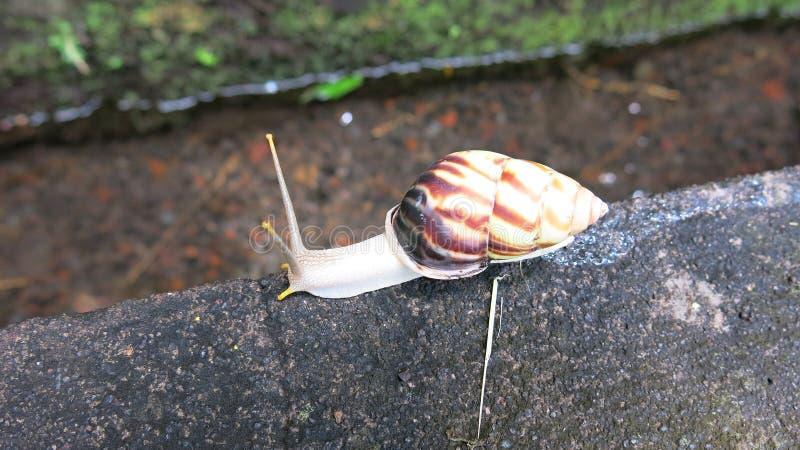 Kleurrijke slak op concrete stap Lange antennes Uit shell stock afbeelding
