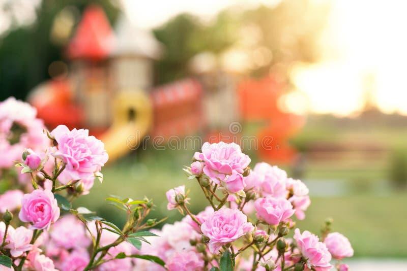 Kleurrijke Speelplaats in het park royalty-vrije stock fotografie