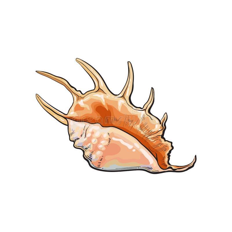 Kleurrijke spiraalvormige kroonslak overzeese shell, de geïsoleerde vectorillustratie van de schetsstijl royalty-vrije illustratie
