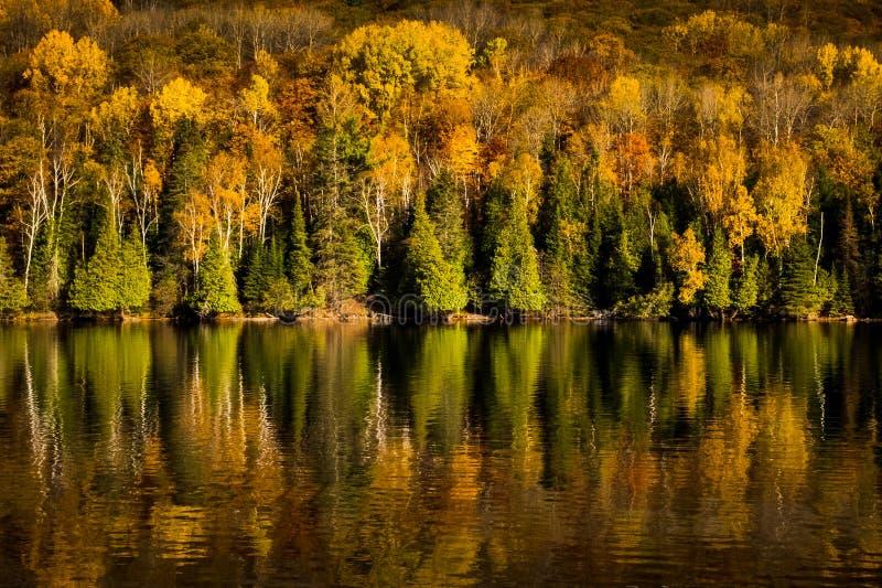 Kleurrijke treeline in de herfst op een meer stock afbeelding