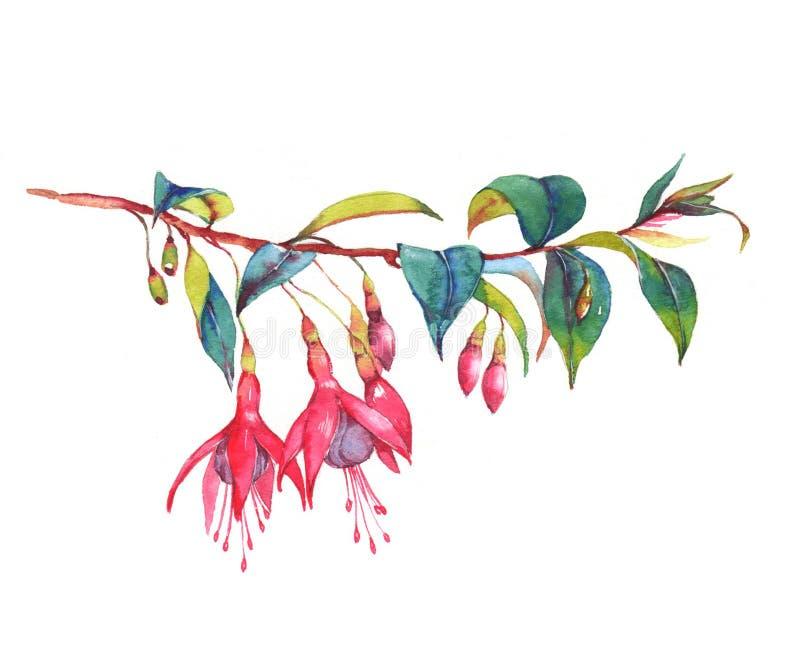 Kleurrijke trillende roze fuchsiakleurig tak vector illustratie