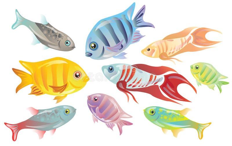 Kleurrijke tropische vissen royalty-vrije stock afbeelding