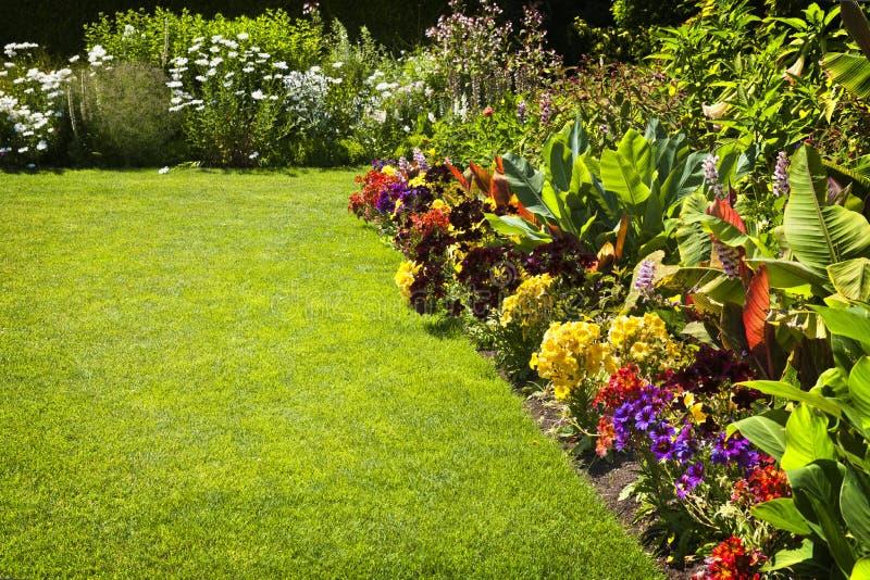 Kleurrijke tuinbloemen stock foto's