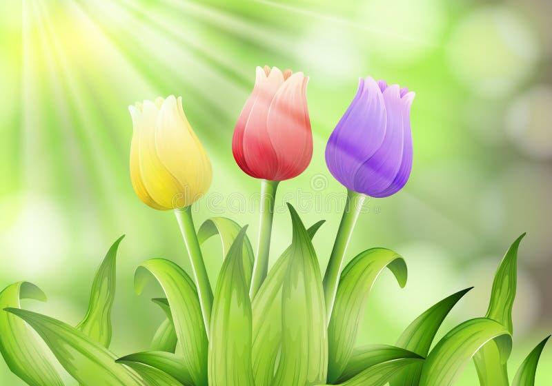 Kleurrijke Tulp op Aardachtergrond stock illustratie