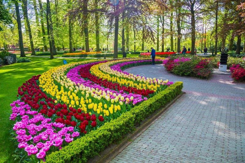 kleurrijke tulpen in het keukenhof park holland redactionele fotografie afbeelding bestaande. Black Bedroom Furniture Sets. Home Design Ideas