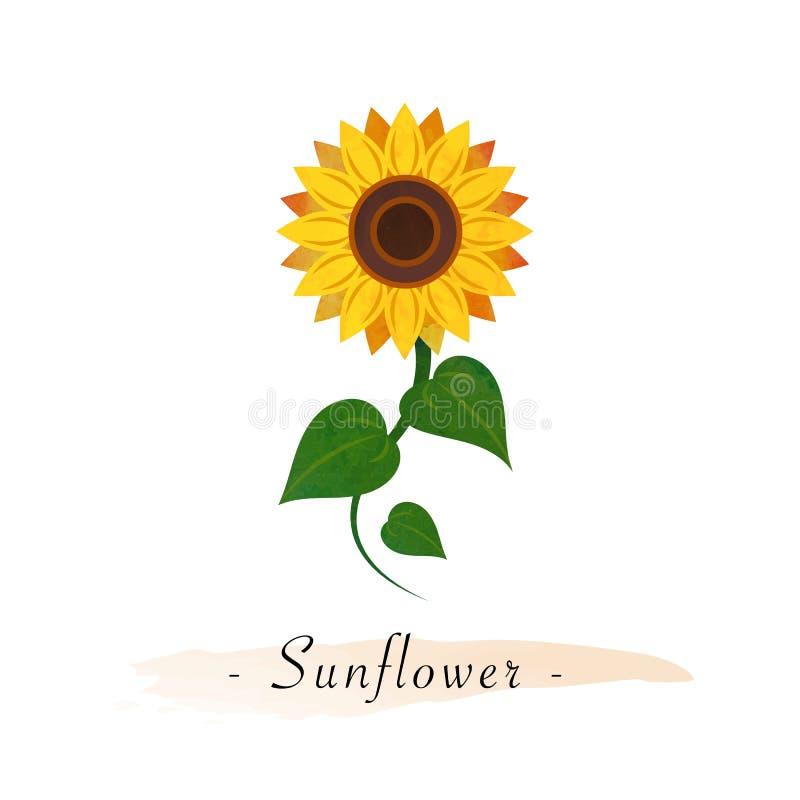 Kleurrijke vector botanische de tuinbloem van de waterverftextuur sunflow stock illustratie