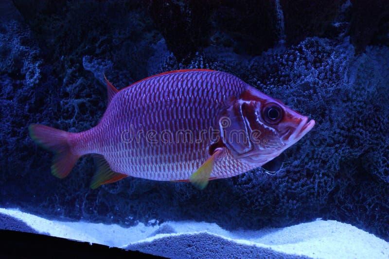 Kleurrijke vissen stock foto's