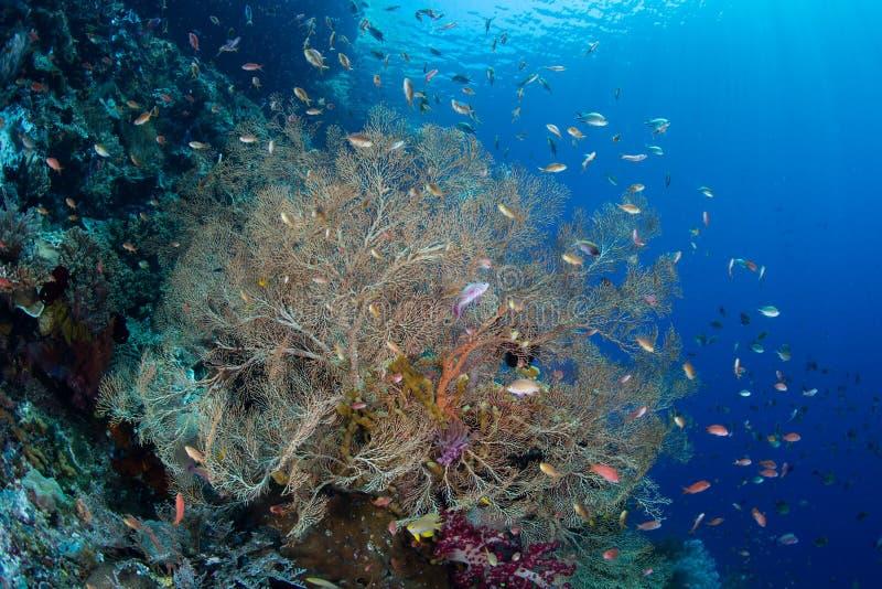 Kleurrijke Vissen en Gorgonian in Raja Ampat stock foto's
