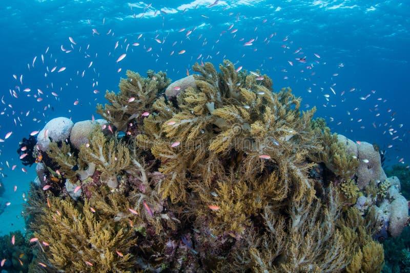 Kleurrijke Vissen en Zachte Koralen in Papoea-Nieuw-Guinea royalty-vrije stock foto