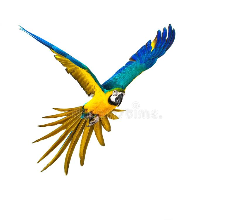 Kleurrijke vliegende papegaai royalty-vrije stock foto's