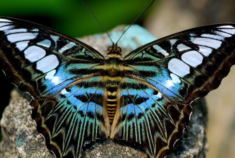 Kleurrijke Vlinder Gratis Stock Foto's