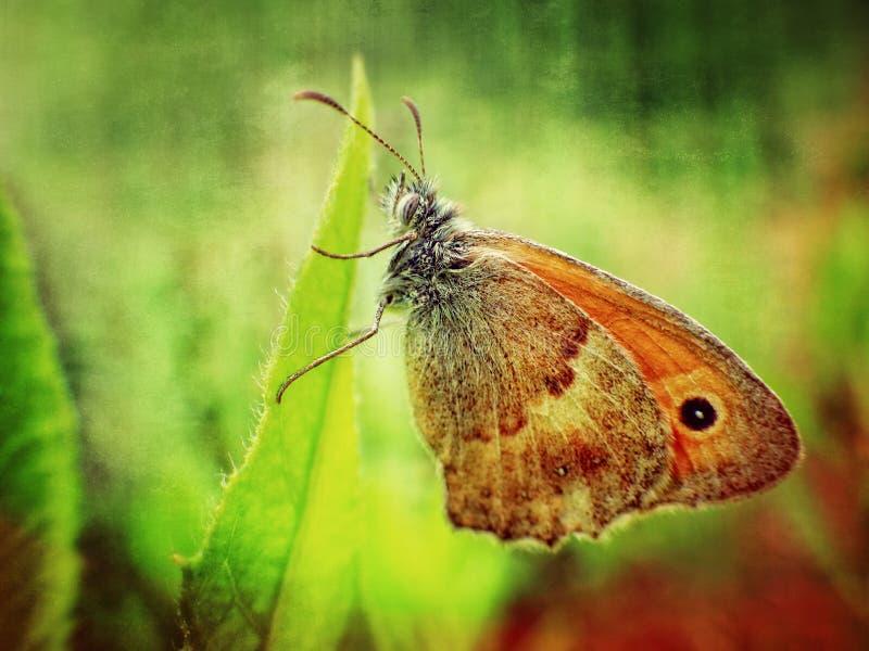 Kleurrijke vlinder stock fotografie
