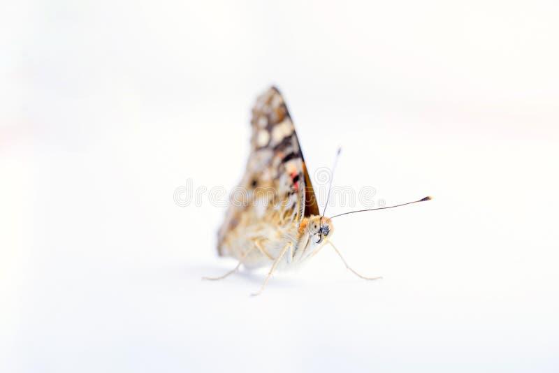 Kleurrijke vlinder die op een witte achtergrond wordt geïsoleerd Exemplaarruimten royalty-vrije stock afbeeldingen