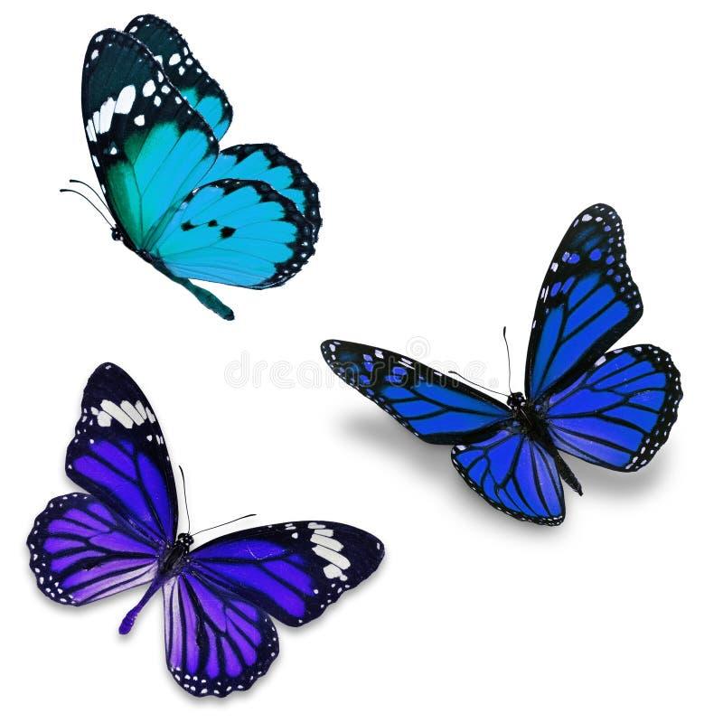Kleurrijke vlinder drie stock afbeelding