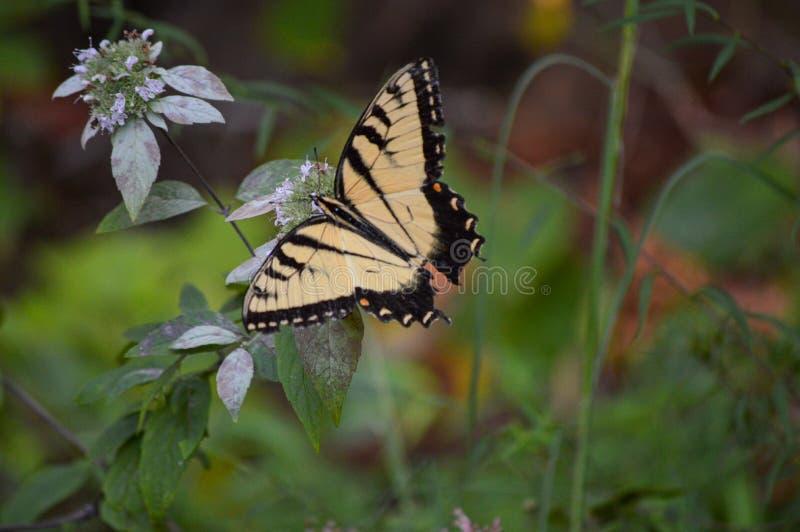 Kleurrijke vlinder landde op een wilde bloem in het bos stock foto