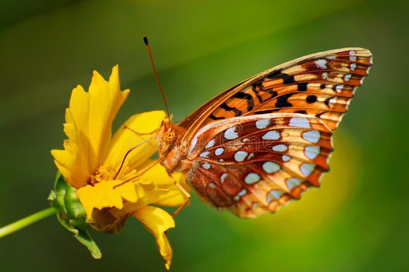Kleurrijke vlinder op bloem stock fotografie