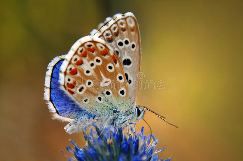 Kleurrijke vlinder op een bloem stock afbeeldingen