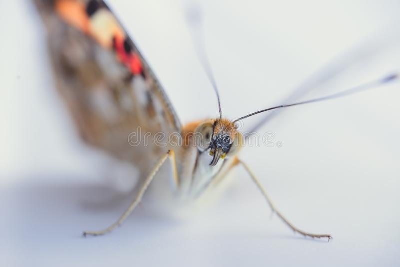 Kleurrijke vlinder op een witte achtergrond Exemplaarruimten royalty-vrije stock foto