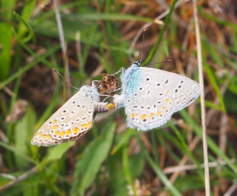 Kleurrijke vlinder twee royalty-vrije stock foto