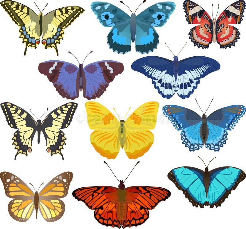 Kleurrijke vlinders vector illustratie
