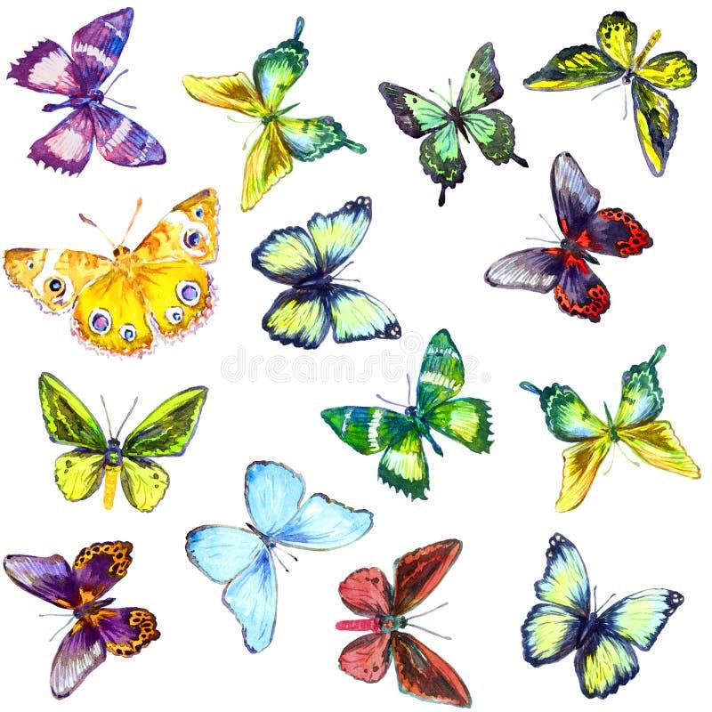 Kleurrijke Vlinders, naadloos patroon stock illustratie