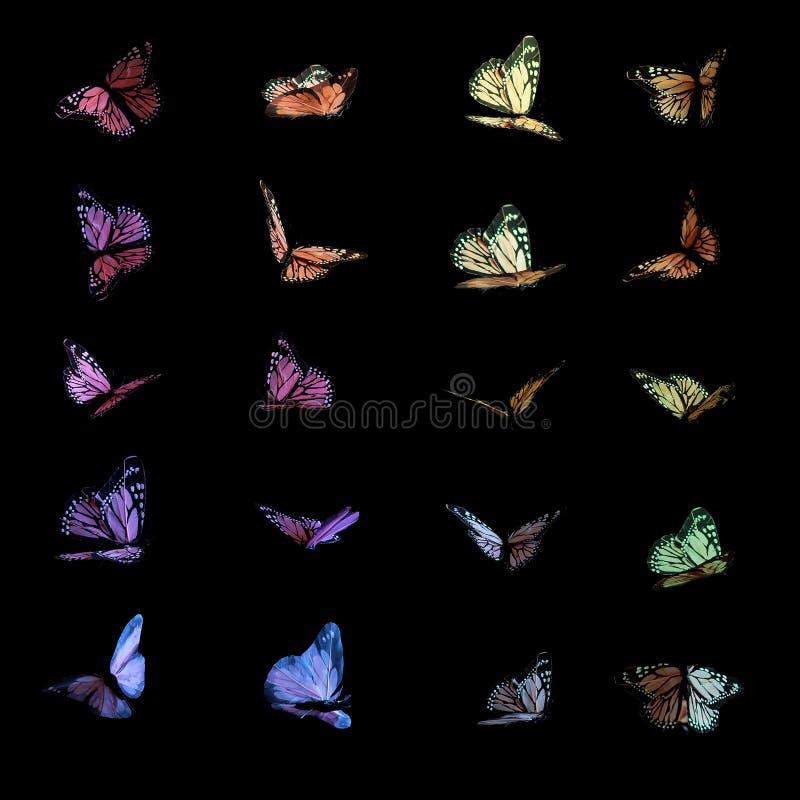 Kleurrijke vlinders op zwarte stock afbeelding