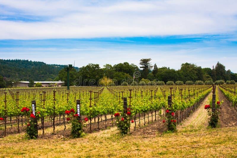 Kleurrijke wijngaarden in Napa-Vallei, Californië royalty-vrije stock afbeelding