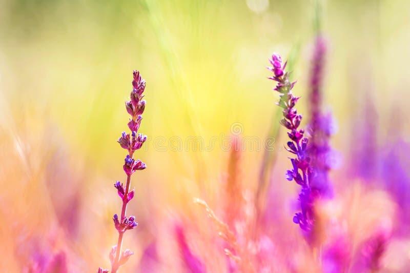 Kleurrijke wilde bloemenachtergrond royalty-vrije stock afbeelding