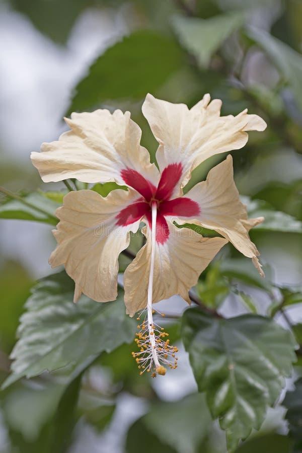 Kleurrijke Wildflower in het Regenwoud stock foto
