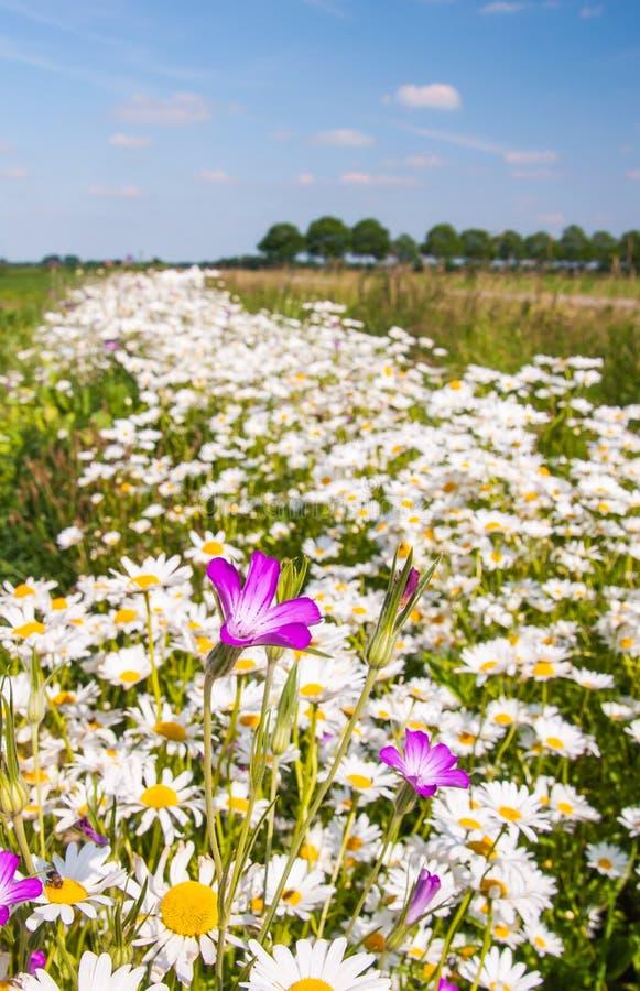 Kleurrijke wildflowers bij een gebiedsrand stock afbeeldingen