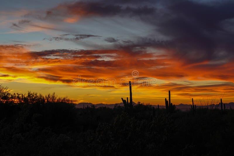 Kleurrijke woestijnzonsondergang in Arizona royalty-vrije stock afbeeldingen