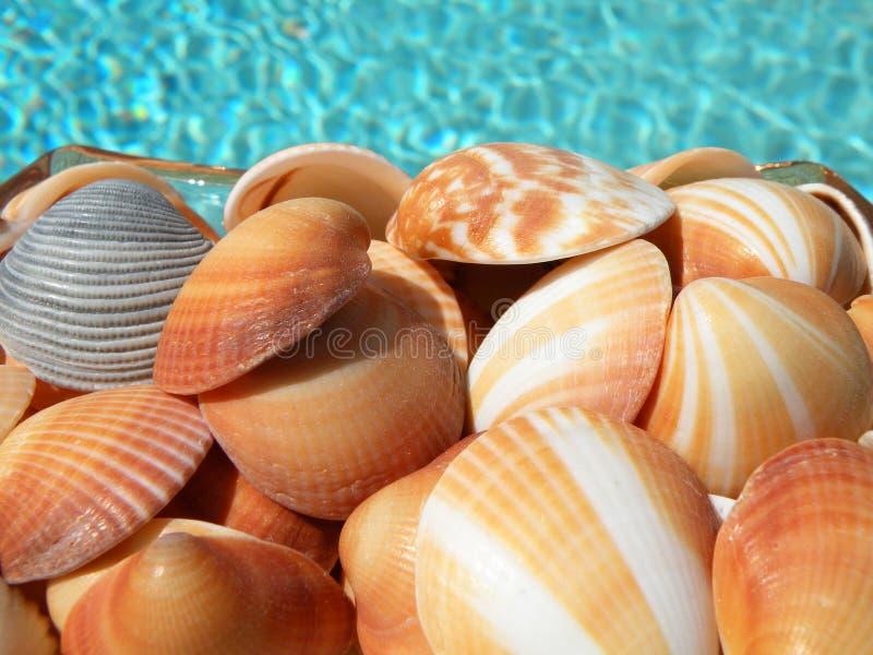 Download Kleurrijke Zeeschelpen stock afbeelding. Afbeelding bestaande uit inzameling - 10779675