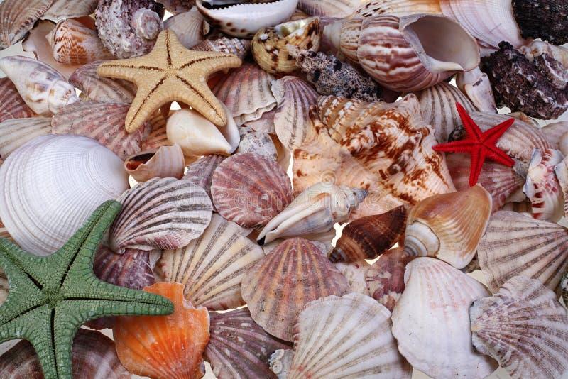 Kleurrijke zeeschelpen en zeesterren als achtergrond royalty-vrije stock afbeeldingen